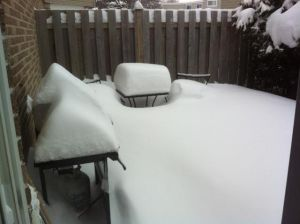 backyard140205